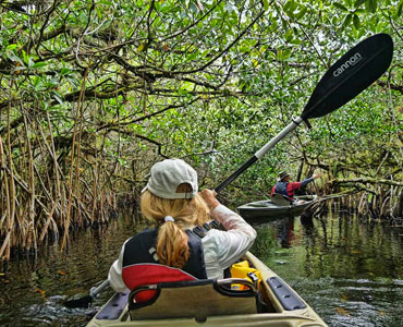 Canoeing in the Everglades