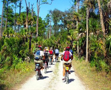 Take the roads of Big Cypress